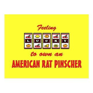Lucky to Own an American Rat Pinscher Fun Design Postcard