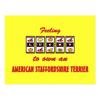 Lucky to Own an American Staffordshire Terrier Postcard