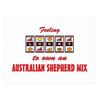 Lucky to Own an Australian Shepherd Mix Fun Design Postcard