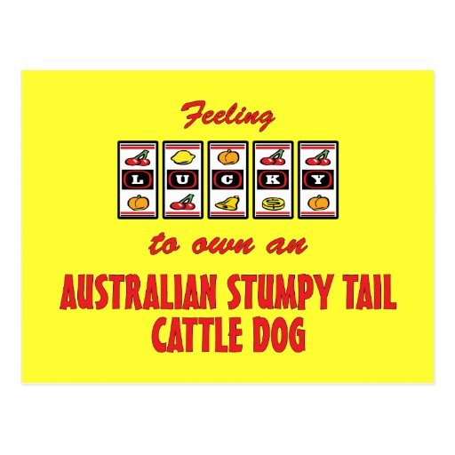 Lucky to Own an Australian Stumpy Tail Cattle Dog Post Card