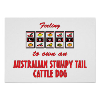 Lucky to Own an Australian Stumpy Tail Cattle Dog Poster