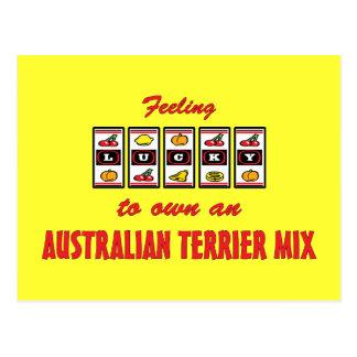 Lucky to Own an Australian Terrier Mix Fun Design Postcard
