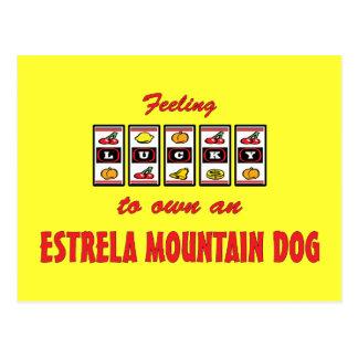Lucky to Own an Estrela Mountain Dog Fun Design Post Cards