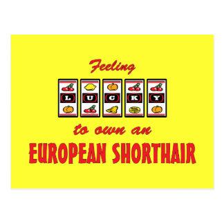 Lucky to Own an European Shorthair Fun Cat Design Postcard