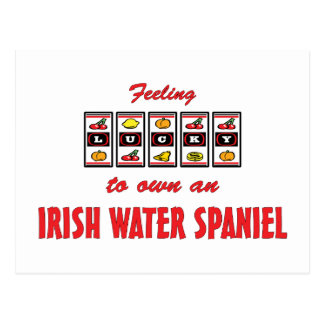 Lucky to Own an Irish Water Spaniel Fun Dog Design Postcard