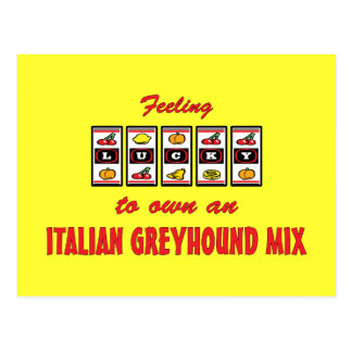 Lucky to Own an Italian Greyhound Mix Fun Design Postcards