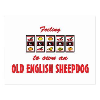 Lucky to Own an Old English Sheepdog Fun Design Postcard