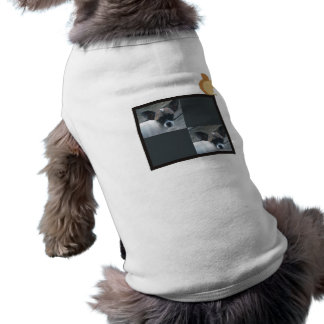 Lucy and friend pet tee shirt
