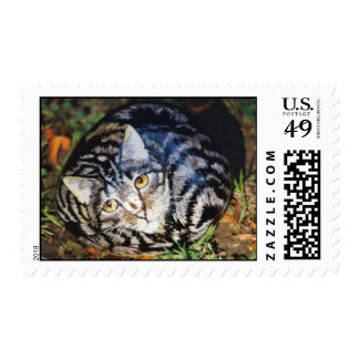 """""""Lucy"""" cat rock stamp"""