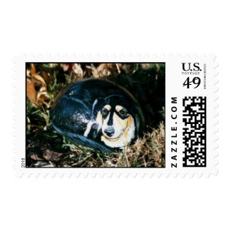 """""""Lucy"""" dog rock stamp"""