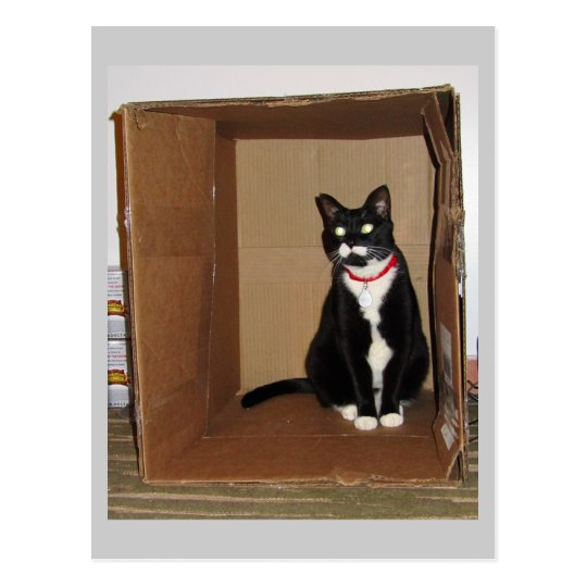 Lucy in a Box Postcard