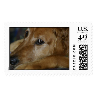 Lucy Stamps