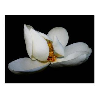 lugar central de la magnolia meridional postal