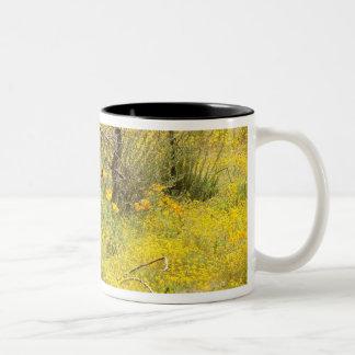 Lugar de la taza de los Wildflowers