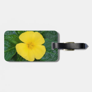 Luggage Tag - West Indian Holly
