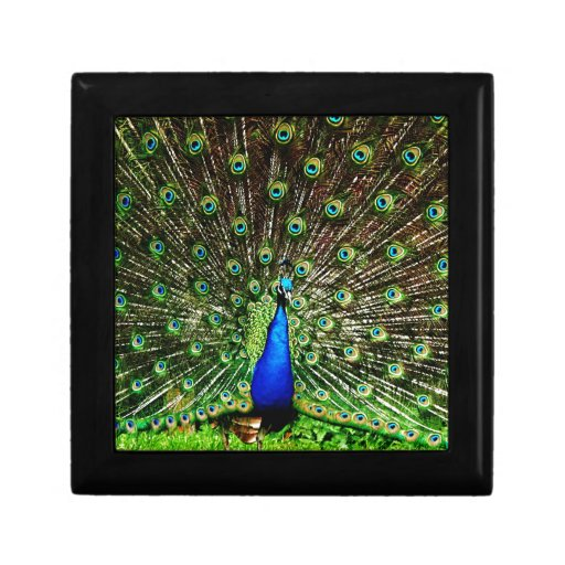 Lujo real animal S del pájaro verde hermoso del pa Caja De Joyas