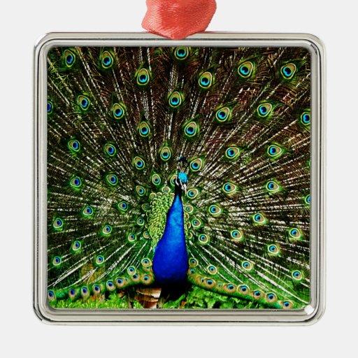 Lujo real animal S del pájaro verde hermoso del pa Ornato