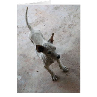 Luk Maa ... Thai Soi Puppy Dog Card