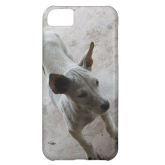Luk Maa ... Thai Soi Puppy Dog Cover For iPhone 5C