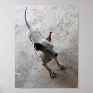Luk Maa ... Thai Soi Puppy Dog Poster