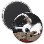 Lullaby Berner & Bunny Fridge Magnets