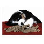 Lullaby Berner & Bunny Post Card