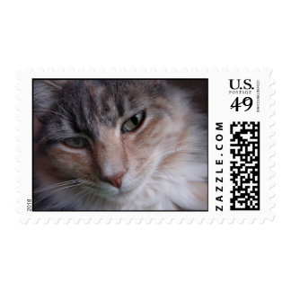 Lulu close-up postage