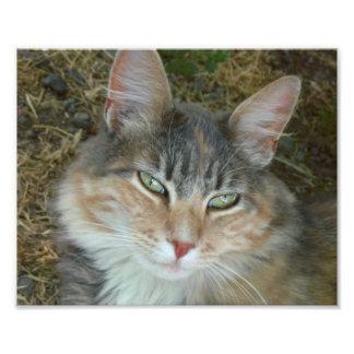 Lulu el gato cojinete