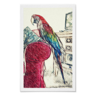 Lulu Macaw On The Sofa Poster Art (Small)