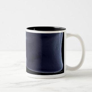 Lumbar Vertebra 3 Two-Tone Coffee Mug