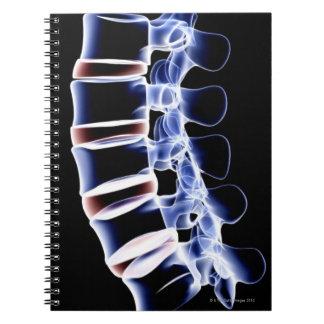 Lumbar Vertebrae 2 Notebook