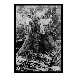 Lumberjacks in Mindoro Region, Philippines 1906 Poster