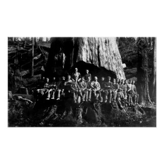 LUMBERJACKS in UNDERCUT -- 1884 Poster