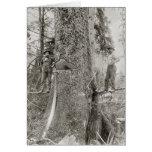 Lumberjacks with Giant Fir, 1905 Card