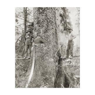 Lumberjacks with Giant Fir, 1905. Vintage Photo Canvas Print