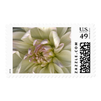 Lumimous Petals Postage