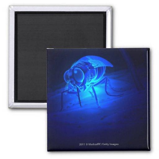Luminescent illustration of a tsetse fly refrigerator magnets