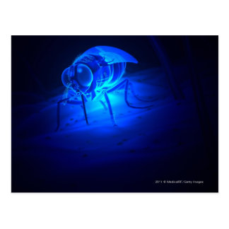 Luminescent illustration of a tsetse fly postcard