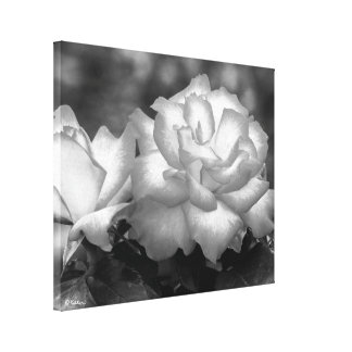 Luminous Black and White Roses Canvas Print