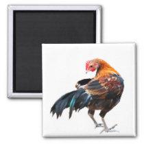 Luminous Chicken Art Magnet
