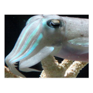 Luminous Cuttlefish Post Card
