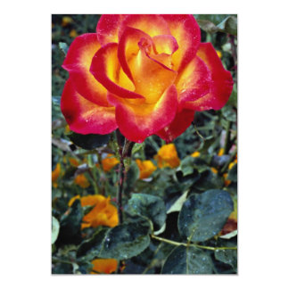 Luminous red and yellow rose with raindrops 5x7 paper invitation card