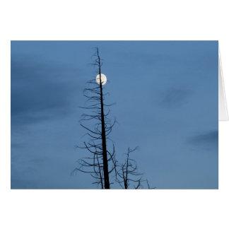 Luna alanceada por el árbol tarjetas