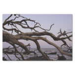 Luna del Driftwood Papel De Seda Pequeño
