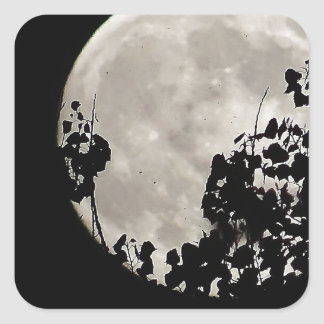 Luna detrás de las hojas oscuras pegatina cuadrada