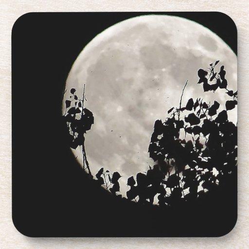 Luna detrás de las hojas oscuras posavasos de bebidas