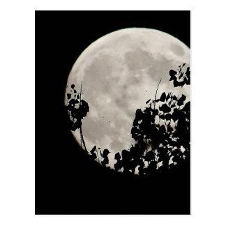 Luna detrás de las hojas oscuras postal