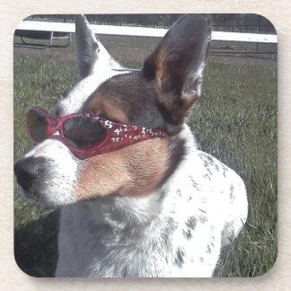 Luna dice el perro fresco en gafas de sol posavasos