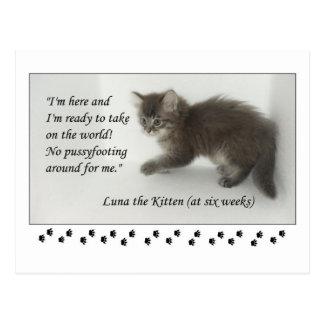 ¡Luna el gatito no hace Pussyfoot alrededor! Postal