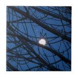 Luna en un árbol azulejo
